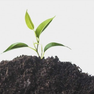 Bio-Fertilizantes naturales